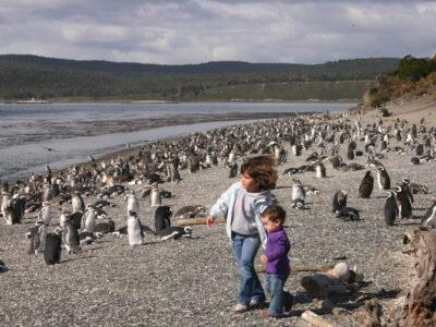 Caminata Con Pingüinos